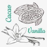 Vaniljfröskidor eller pinnar och kakaohandteckningen skissar isolerat på vit bakgrund Arom för vaniljväxtblomma stock illustrationer