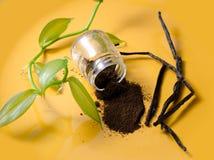 Vaniljfröskidor, fröpulver och ny växt Arkivfoto