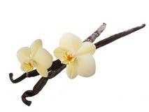 Vaniljfröskidor och blommor royaltyfria foton