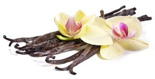 Vaniljpinnar med en blomma. royaltyfria bilder