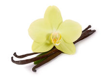Vaniljpinnar och gula orkidér Fotografering för Bildbyråer