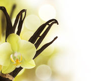 Vanilla. High-quality Vanilla Beans and flower over blurred background royalty free stock photo