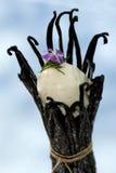 Vanilla Royalty Free Stock Images