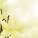 Vanilla Stock Image
