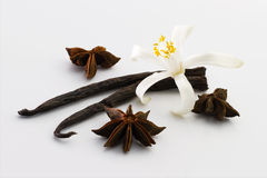 Vanilla, anise, flower royalty free stock photography