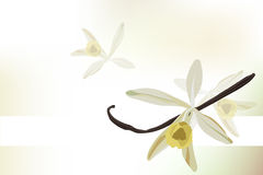 Vanilla  background. Background with an illustration of vanilla Stock Photo