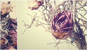 Vanilla background. Ekibana of dried roses in pastel shades Royalty Free Stock Images
