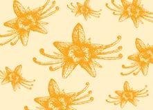 Vanilla background. Yellow beautiful flower of vanilla background Stock Photography