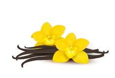 Vanilla background. Vector. Vanilla background with yellow flowers. Vector vector illustration