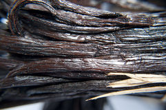 Vanilla bean close-up Stock Image