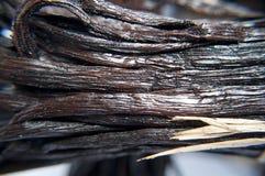Vanilla bean close-up. Close-up of oily, plum vanilla beans Stock Image