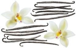 Free Vanilla Bean Element Set Isolated On White Background Stock Images - 92577514