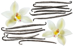 Vanilla bean element set isolated on white background. Vanilla flower and bean element set isolated on white background for package design stock images