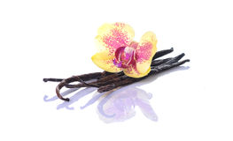Vanilla Bean and Flower. Isolated on white background Stock Photo
