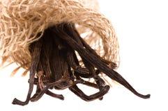 Vanilla beans Stock Images