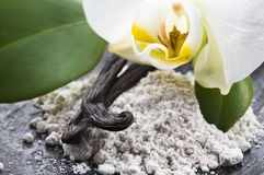 Vanilla beans with aromatic sugar and flower Royalty Free Stock Image