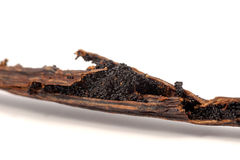 Vanilla beans on cracked stick Royalty Free Stock Image