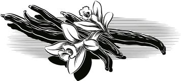 Vanilla beans and flowers. Vanilla beans and flowers leaning against a table Royalty Free Stock Photography