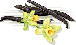 Vanilla beans and flowers. Vanilla beans and flowers leaning against a table Stock Photo