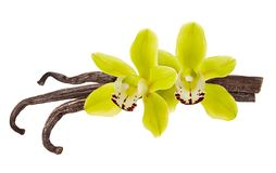 Vanilla beans isolated. Flower and pod of vanilla Orchid isolated on  white background as  aroma food ingredient. Close up royalty free stock photos