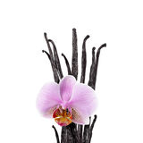 Vanilla beans and orchid flower Royalty Free Stock Photography