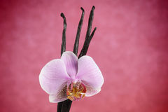 Vanilla beans and pink orchid flower Stock Image