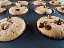 Vanilla and chocolate chips muffins royalty free stock images