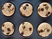 Vanilla and chocolate chips muffins stock photos