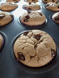 Vanilla and chocolate chips muffins stock image