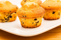 Vanilla with chocolate chips Muffins royalty free stock image