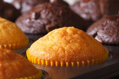 Vanilla and chocolate muffins in baking dish on a table macro Stock Photo