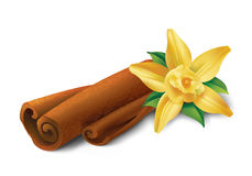Vanilla  and cinnamon. Photo realistic illustration of cinnamon sticks and vanilla flower on white background Royalty Free Stock Photography