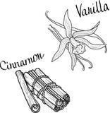 Vanilla and cinnamon Royalty Free Stock Images