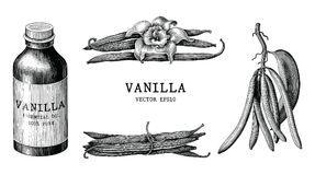 Vanilla collection hand draw vintage clip art isolated on white. Background royalty free illustration