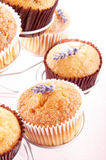 Vanilla cupcake with lavender Royalty Free Stock Images