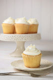 Vanilla cupcakes ready to eat Stock Images