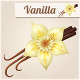 Vanilla. Detailed Vector Icon Royalty Free Stock Images