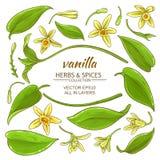Vanilla elements set. Vanilla plant elements set on white background Royalty Free Stock Photos
