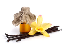 Vanilla essential oil in pharmaceutical bottle Royalty Free Stock Image