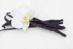 Vanilla with flower. On white Stock Photo
