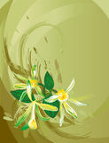 Vanilla flower. On grunge background, vector illustration Royalty Free Stock Images