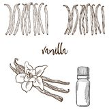 Vanilla flower and bootle spicy Stock Images