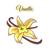 Vanilla Flower And Pods Royalty Free Stock Photos
