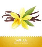Vanilla flower and pods. Over white background Stock Images