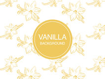 Vanilla flower sketch on white background rectangular composition Royalty Free Stock Image