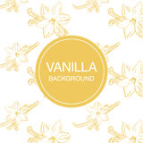Vanilla flower sketch on white background square composition Stock Photo