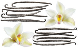 Vanilla flower stick element set isolated. On white background for package design stock photography