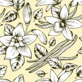 Seamless elegant vector vintage vanilla pattern royalty free illustration