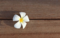 Vanilla flower on wood Stock Photography