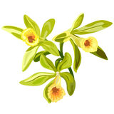 Vanilla flowers card Royalty Free Stock Photos